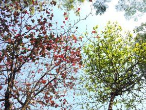 Ri Yue Soleil & Lune ⎮ Médecine traditionnelle chinoise à Savenay (Loire-Atlantique) - Article 5 saisons